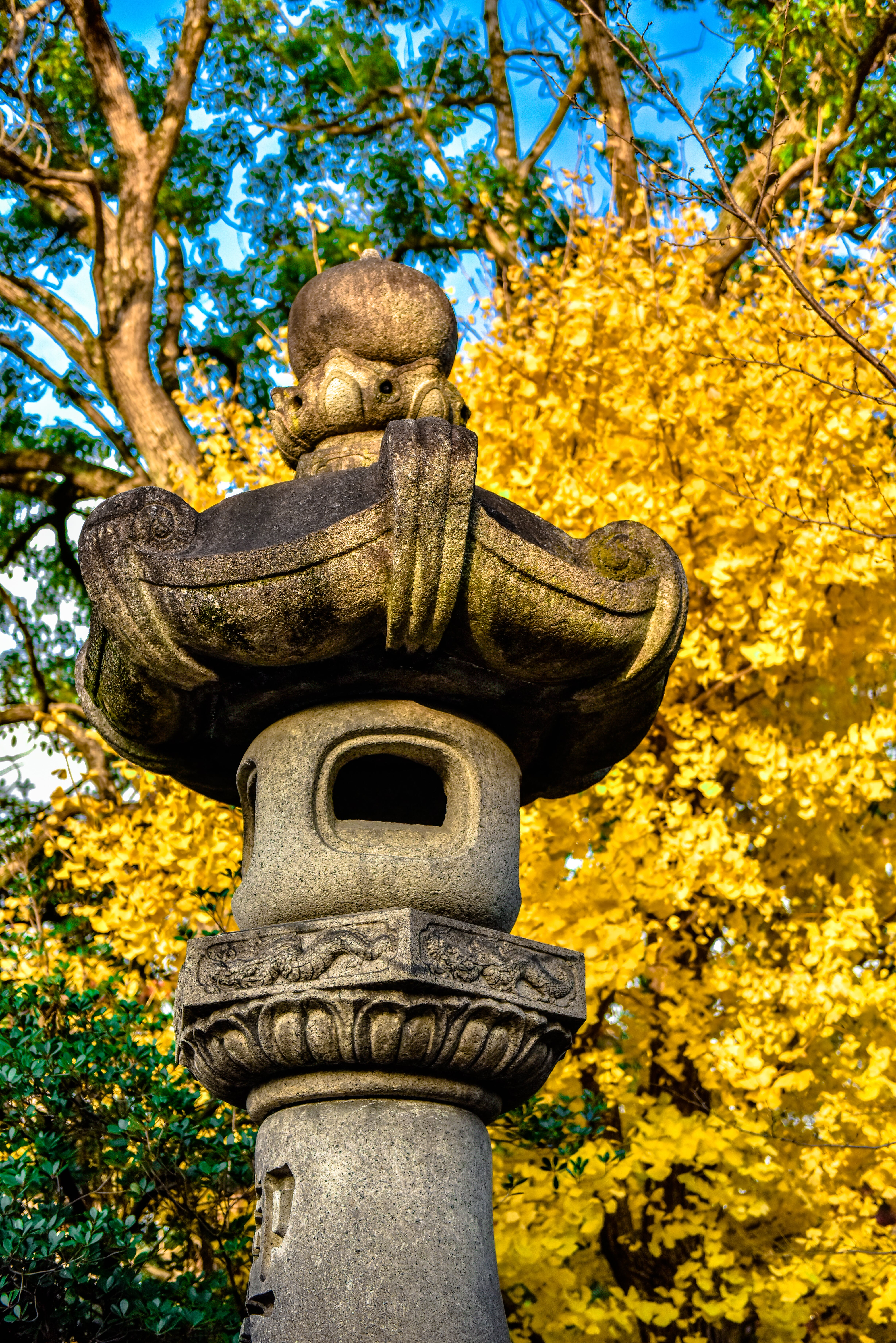 Free stock photo of autumn, autumn colors, color, japan