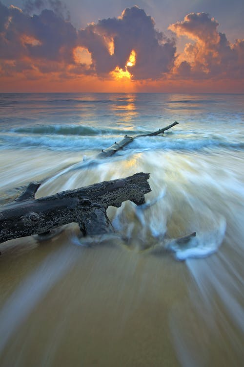 Black Wood Branch in Beach Across Wavy Sea during Sunset