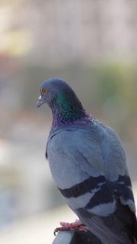 Free stock photo of bird, animal, grey, watch