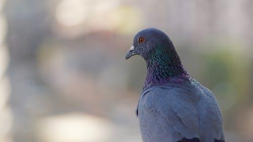 Imagine de stoc gratuită din animal, aripă, căutare, culori