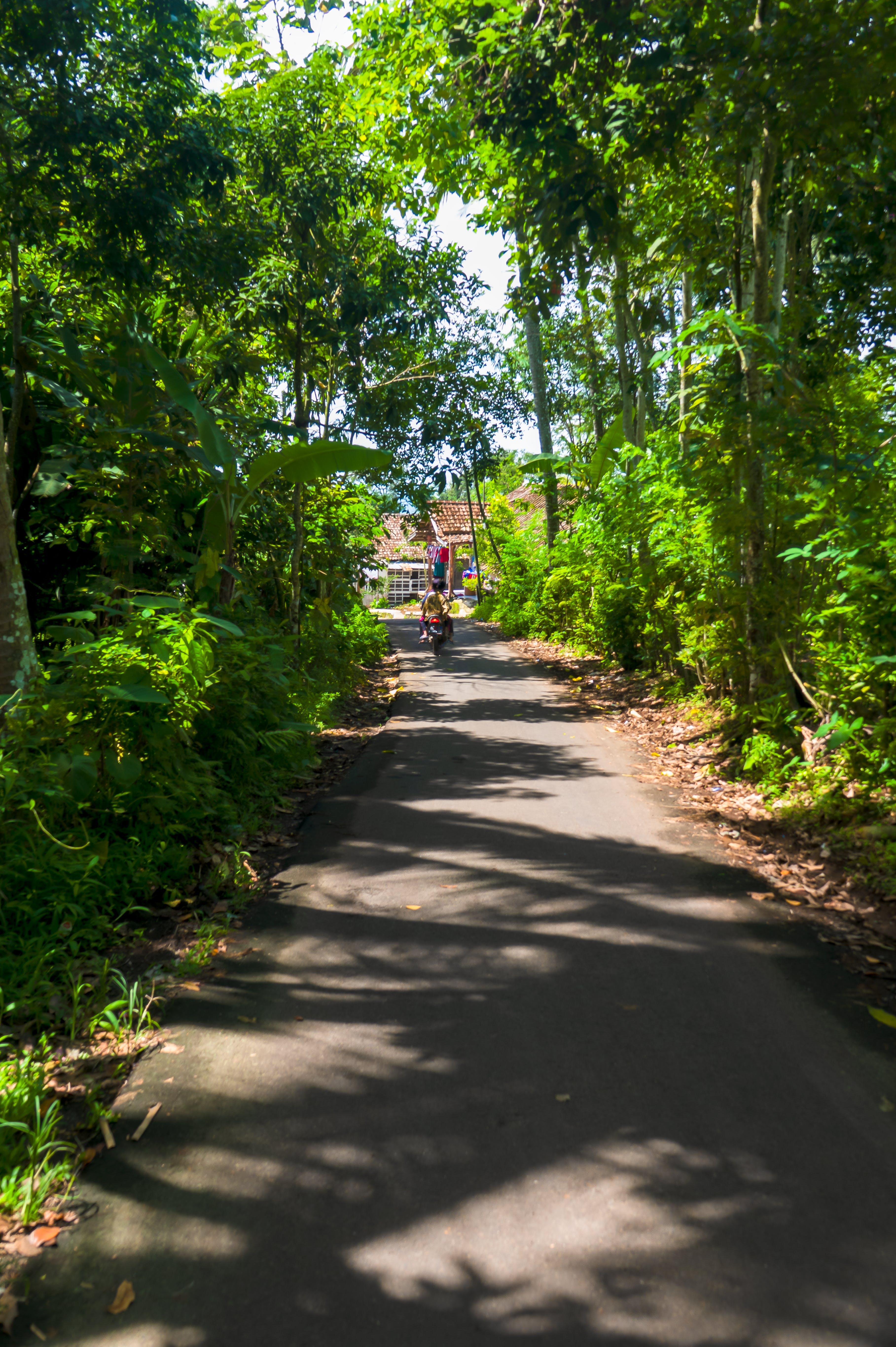 小径, 木, 植物, 道路の無料の写真素材