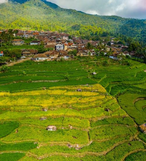 Ilmainen kuvapankkikuva tunnisteilla droonikuva, ilmakuva, indonesia, kentät