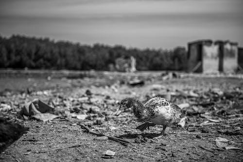 Fotos de stock gratuitas de animal, cambiar, contaminación, contaminación del aire