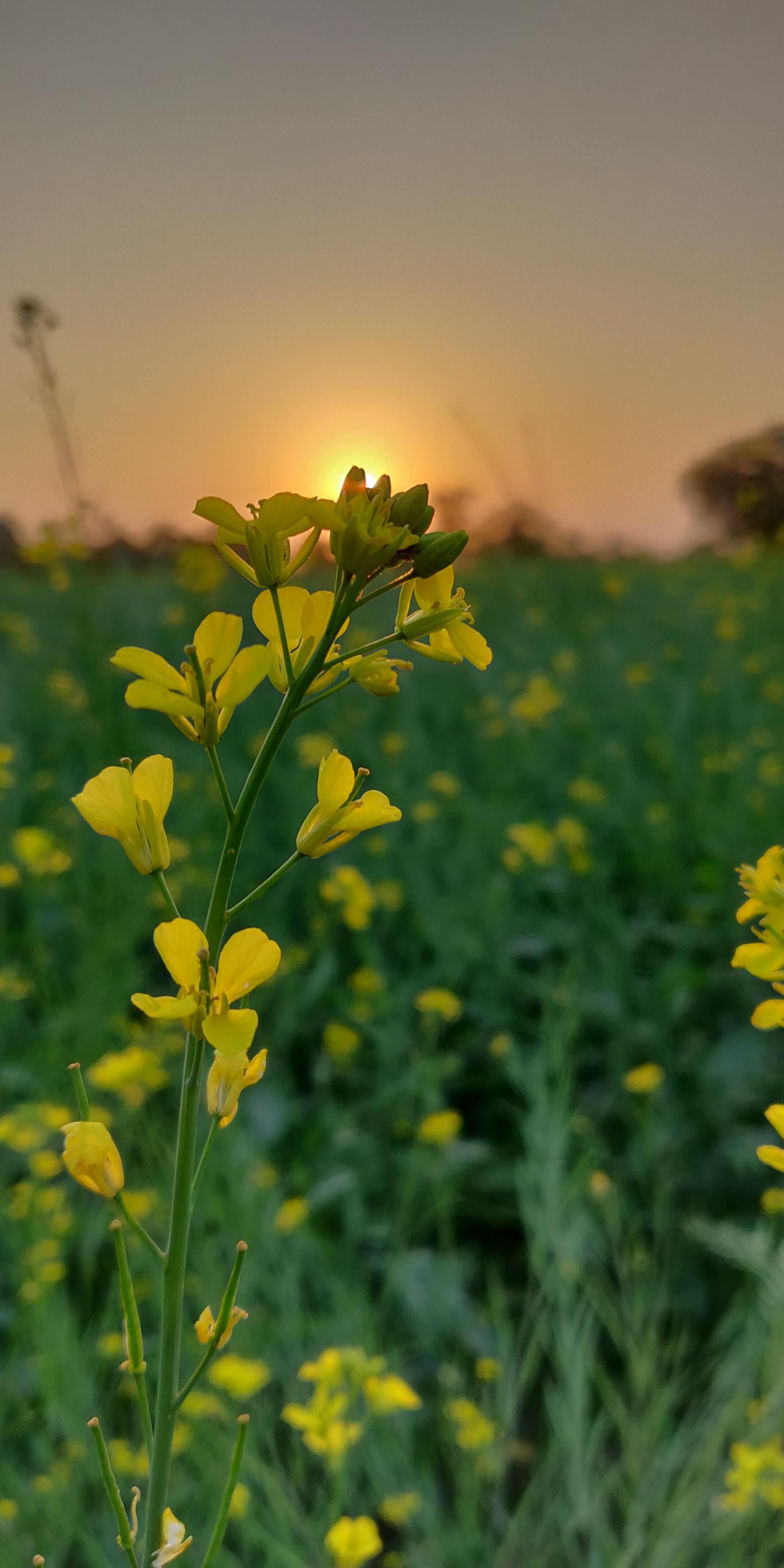 Free Stock Photo Of Blur Flower Focus
