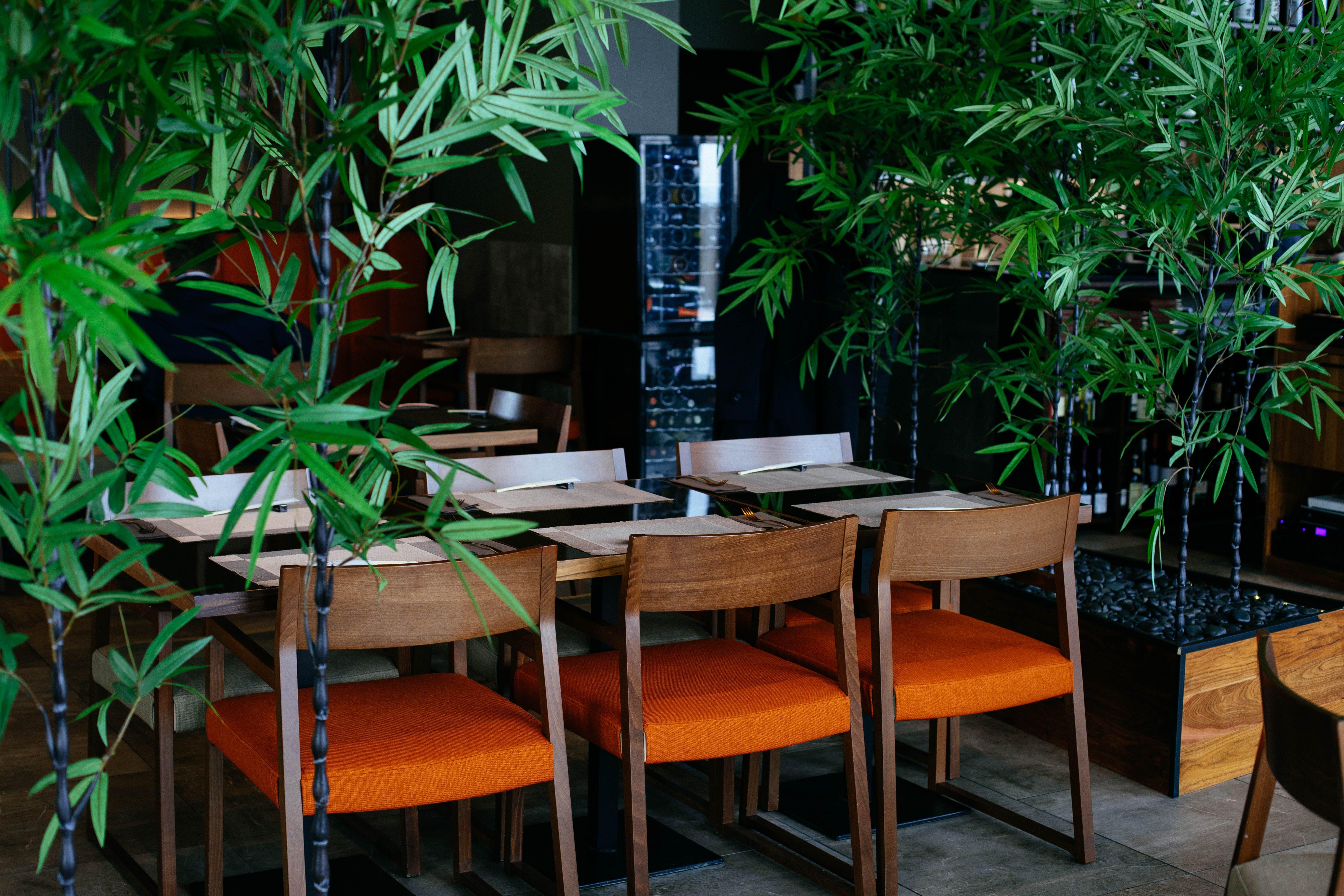 Chairs Near Plants
