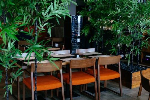 Gratis lagerfoto af indendørs, pladser, Restaurant, stole