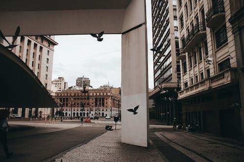 Безкоштовне стокове фото на тему «автомобілі, архітектура, Бразилія, будівлі»