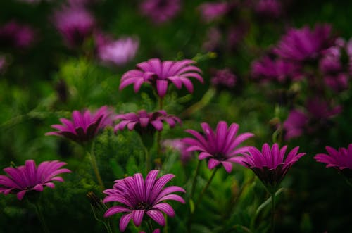 Free stock photo of flowers, green, Israel, purple