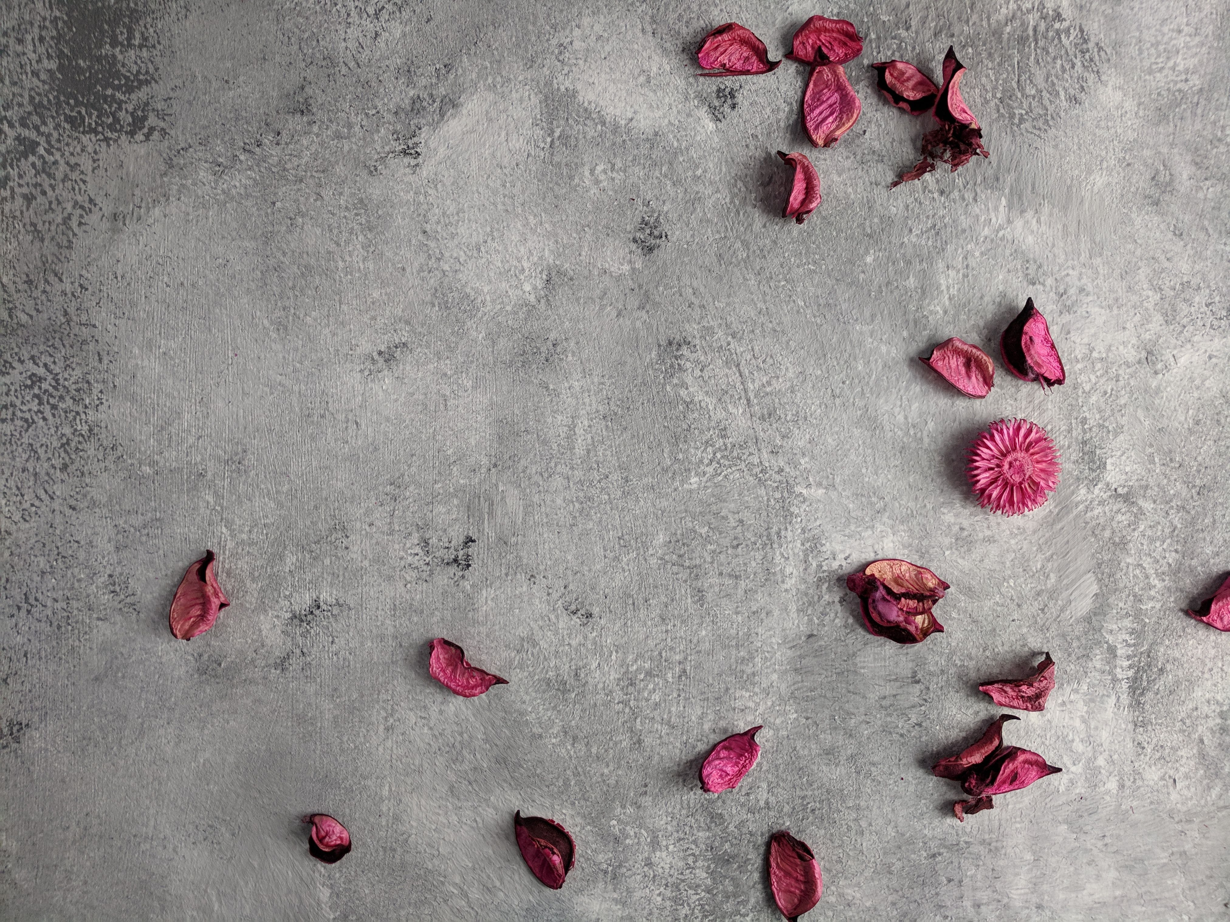 Free stock photo of art background, background, dried petals, petal