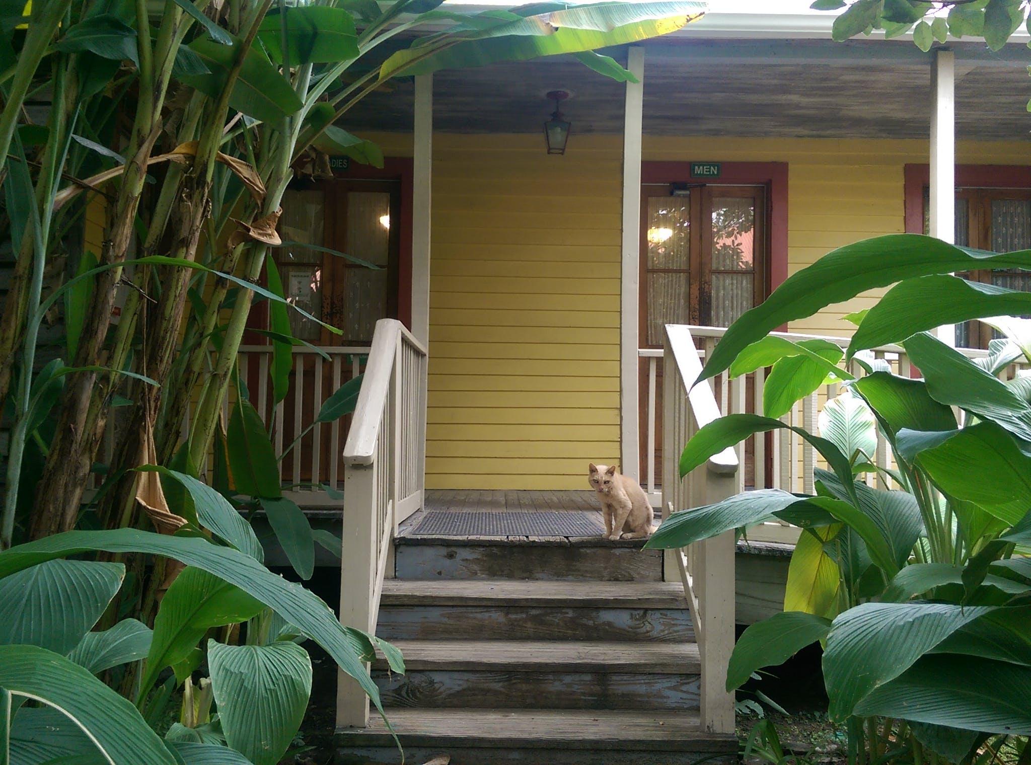 Free stock photo of cat, Laura, Louisuiana, plantation