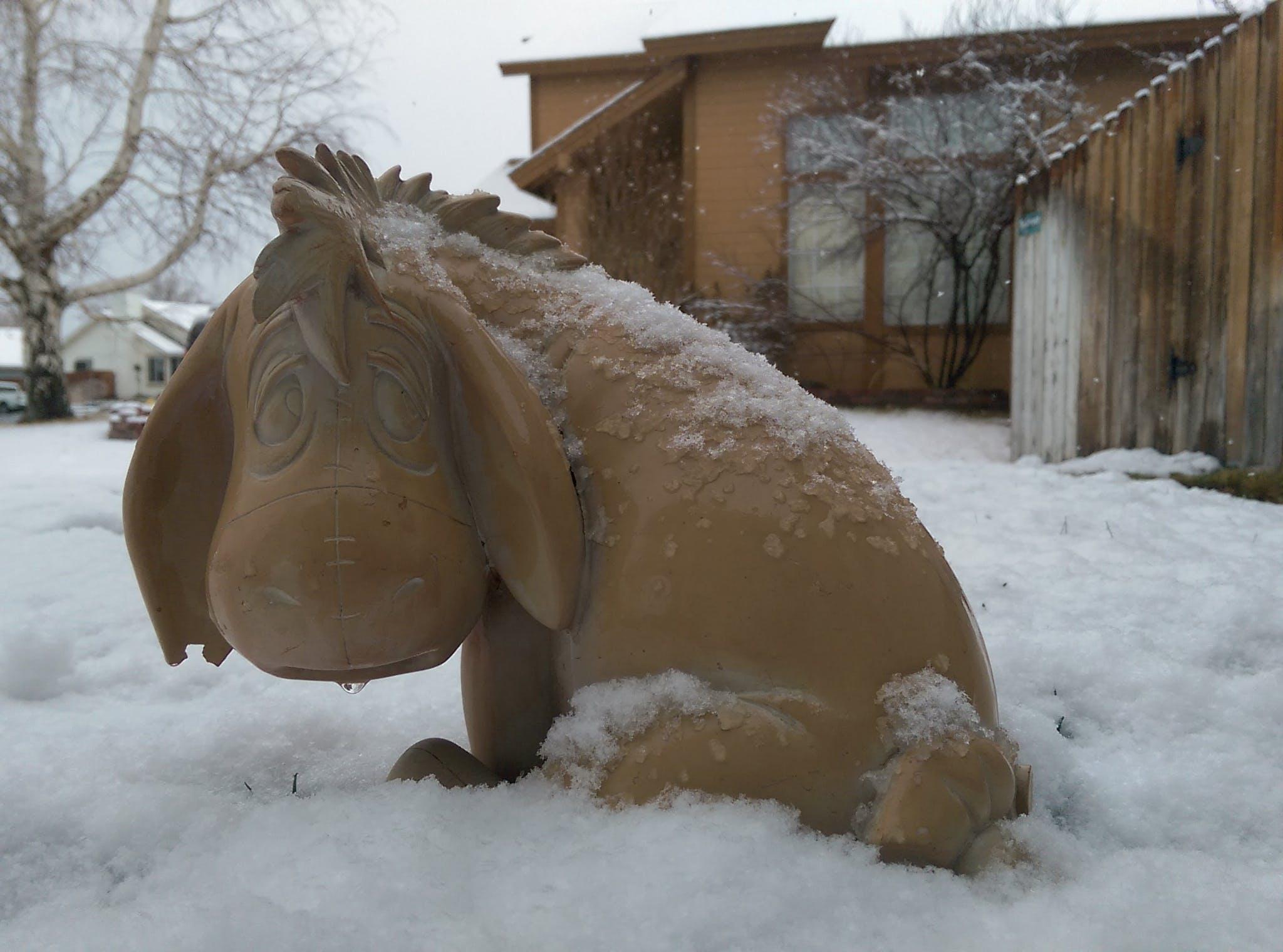 Free stock photo of cold, disney, Eeyore, sad