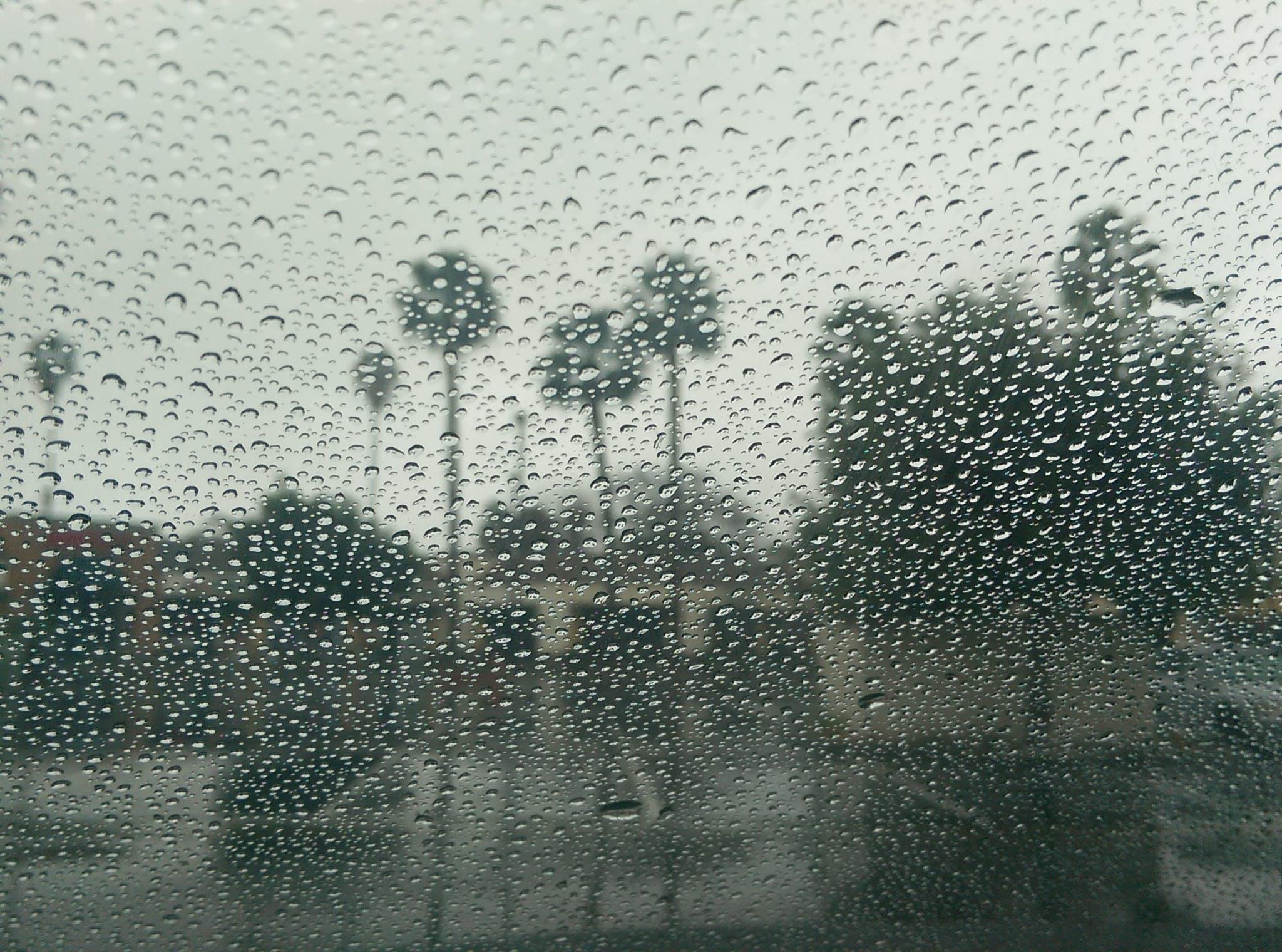 Free stock photo of palm trees, rain, rainy day, winter