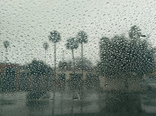 Безкоштовне стокове фото на тему «дощ, Дощовий день, зима, пальми»