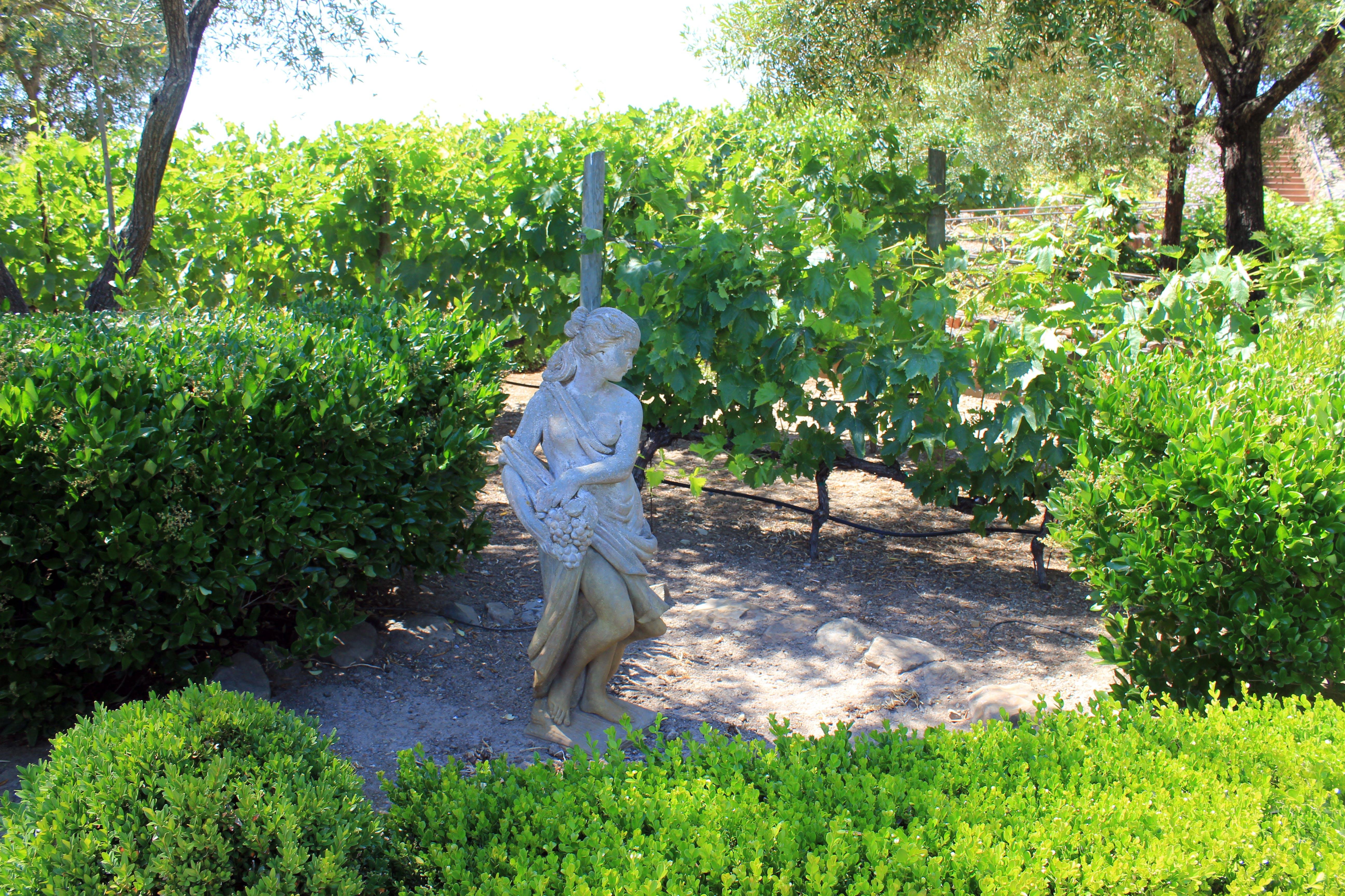 Free stock photo of statue, vineyard