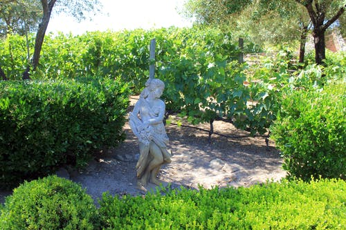 Free stock photo of statue, vineyard
