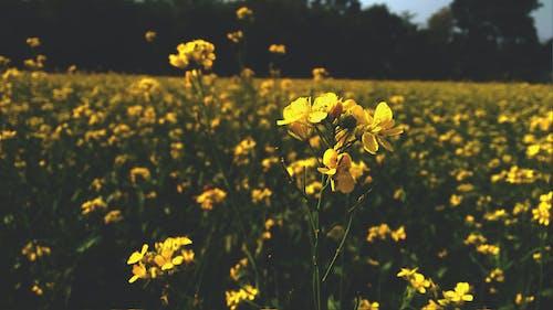 คลังภาพถ่ายฟรี ของ musted, ดอกไม้สีเหลือง, ตีม, ท้องฟ้า