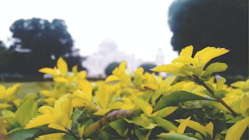 kalküta, odaklı, victorial, yeşil Yaprak içeren Ücretsiz stok fotoğraf