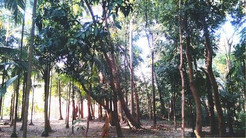 คลังภาพถ่ายฟรี ของ saurav, ป่า, ป่าไม้เขียวขจี, สวน