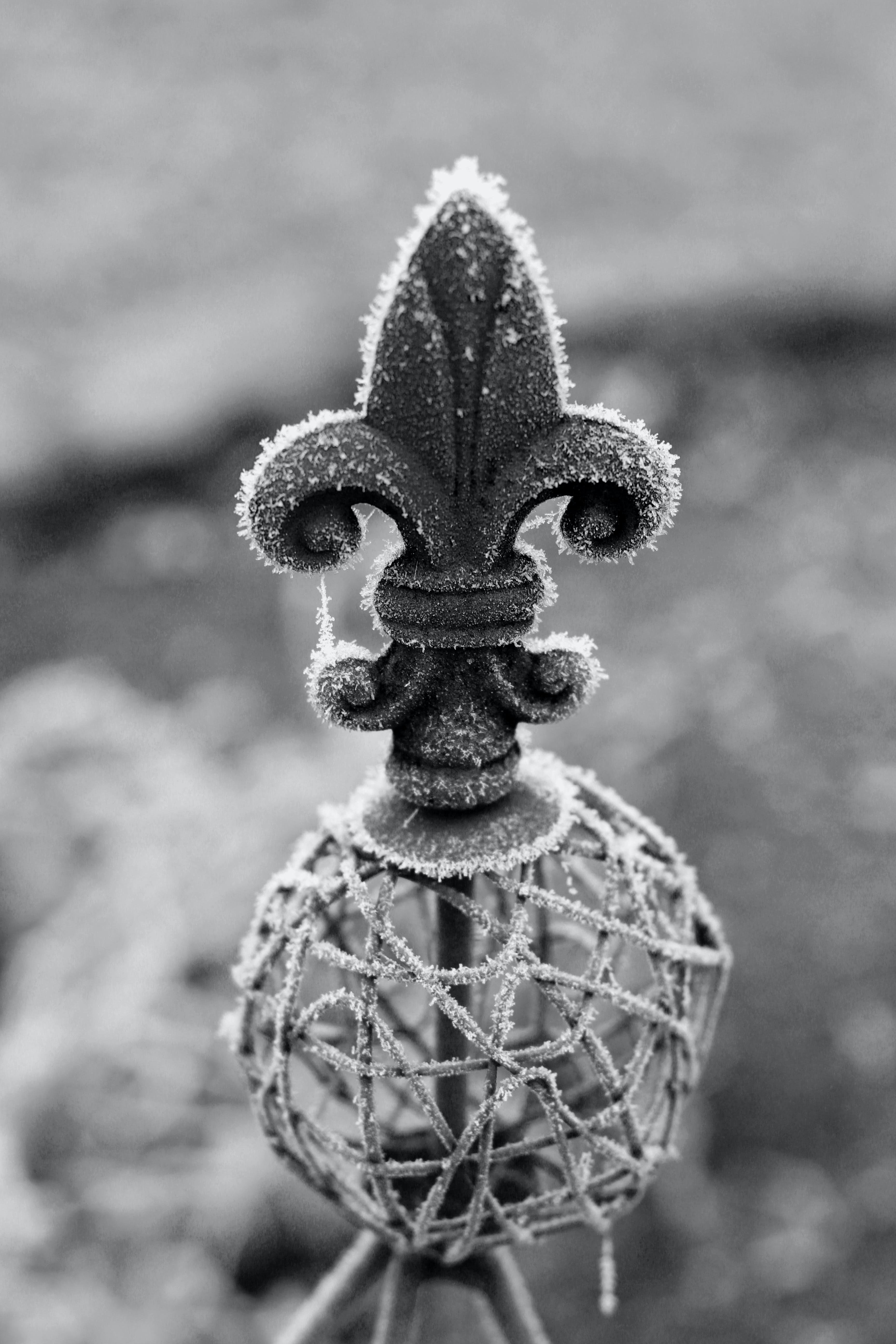 Free stock photo of black-and-white, cold, frost, garden