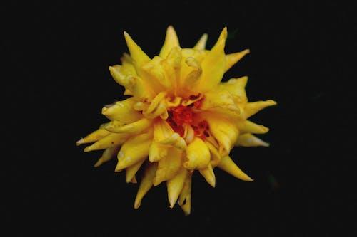 Darmowe zdjęcie z galerii z ciemny, kolory, kwiat, lato