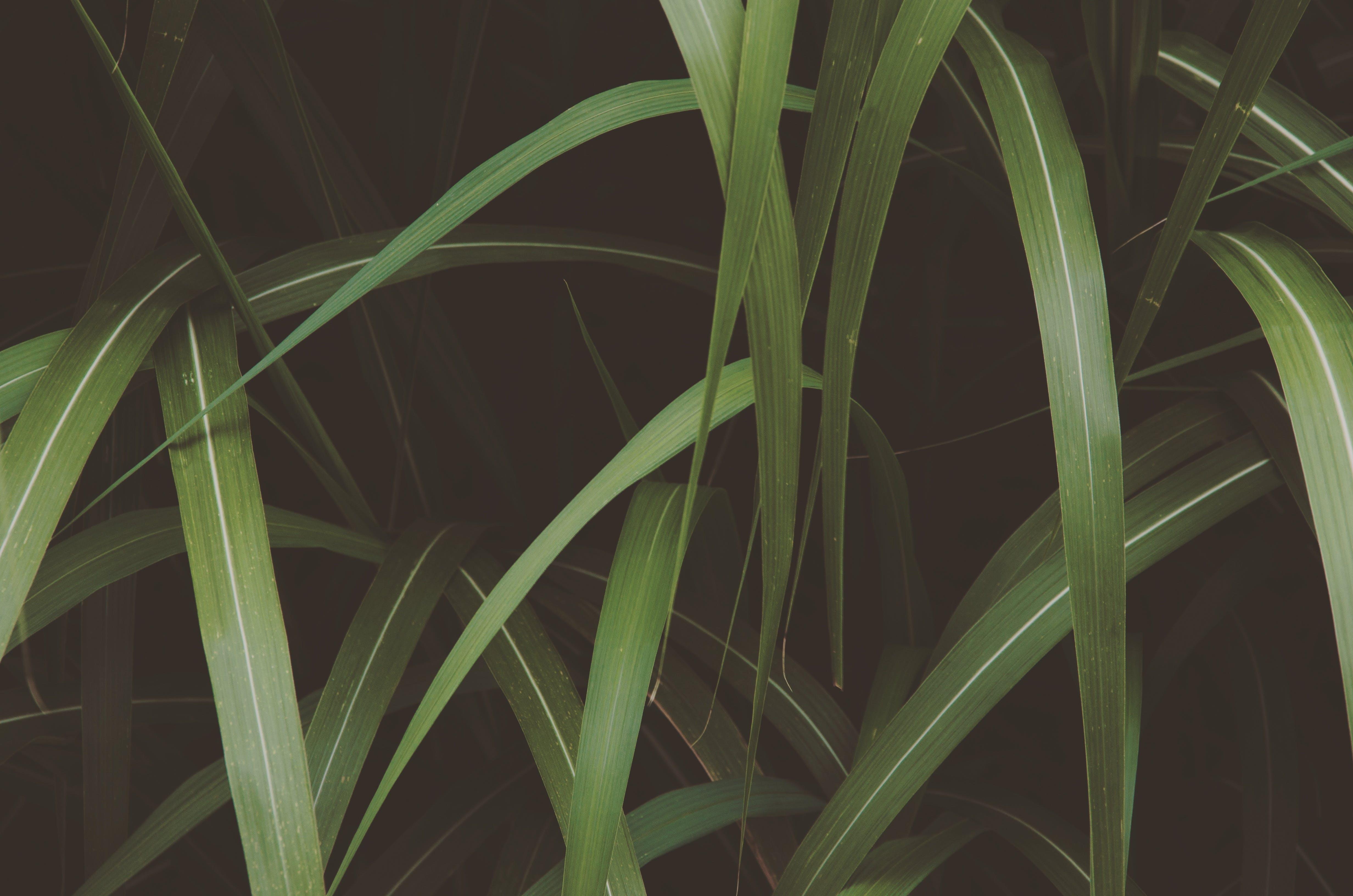 Kostnadsfri bild av gräs, grön, utomhusutmaning, växt