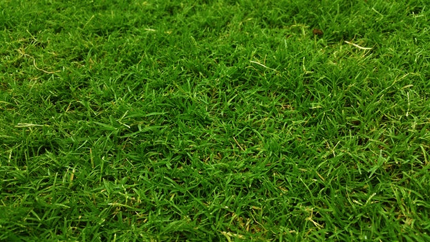 Free stock photo of nature, field, pattern, garden