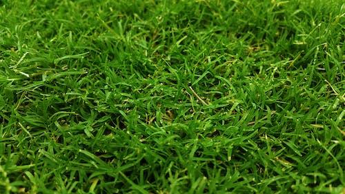 Gratis lagerfoto af bane, close-up, eng, græs