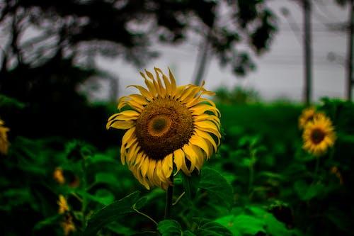 Free stock photo of brasil, flores, natureza, sao paulo