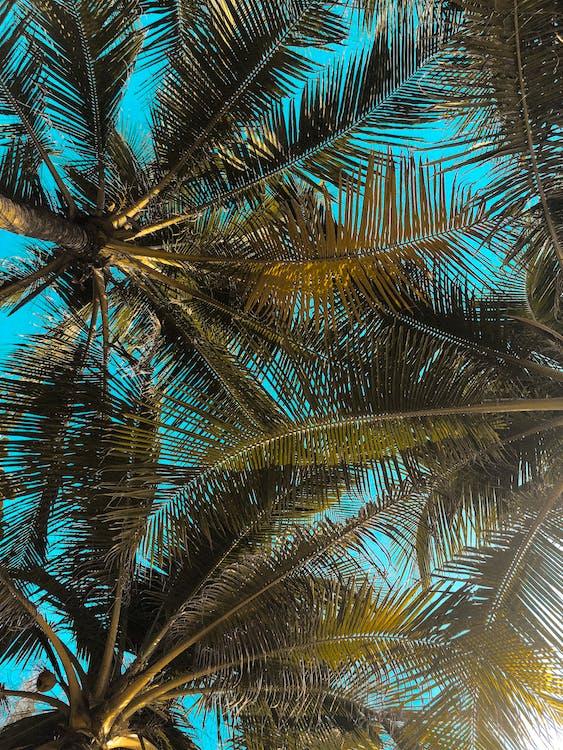 denní světlo, dovolená, fotografie znízkého úhlu