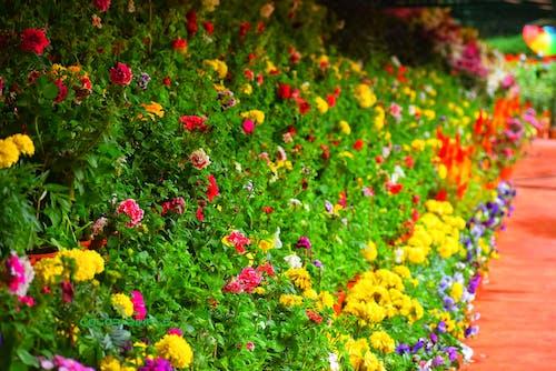 Free stock photo of A beautiful garden