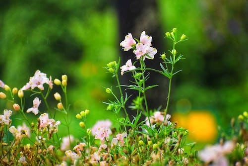 Free stock photo of beautiful flower, flower