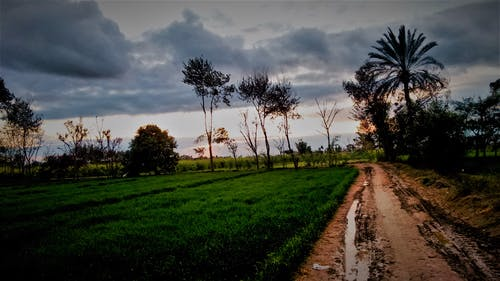 Imagine de stoc gratuită din culturi, curmale, după ploaie, frumusețe în natură