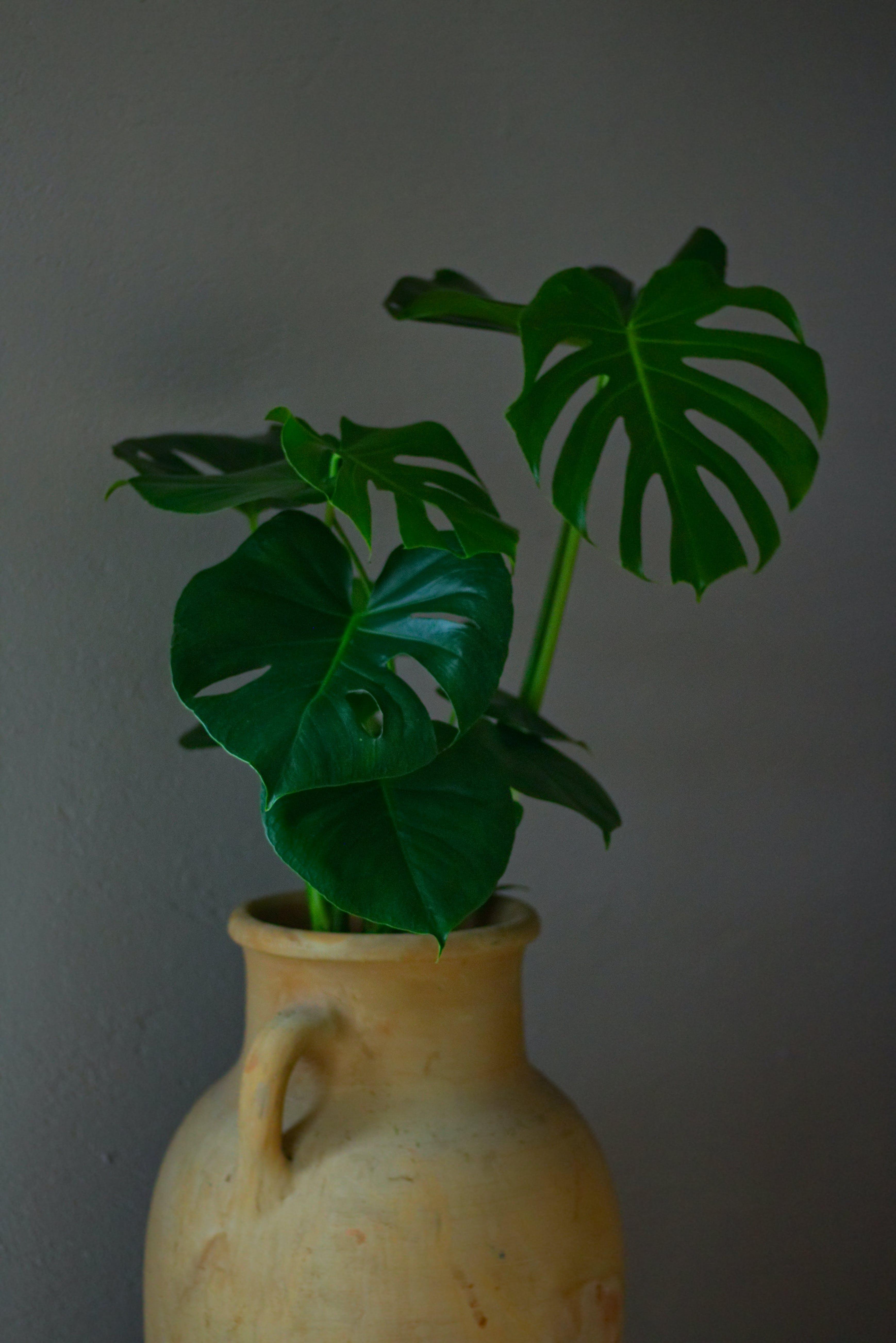 Free stock photo of 4k wallpaper, dark green plants, garden