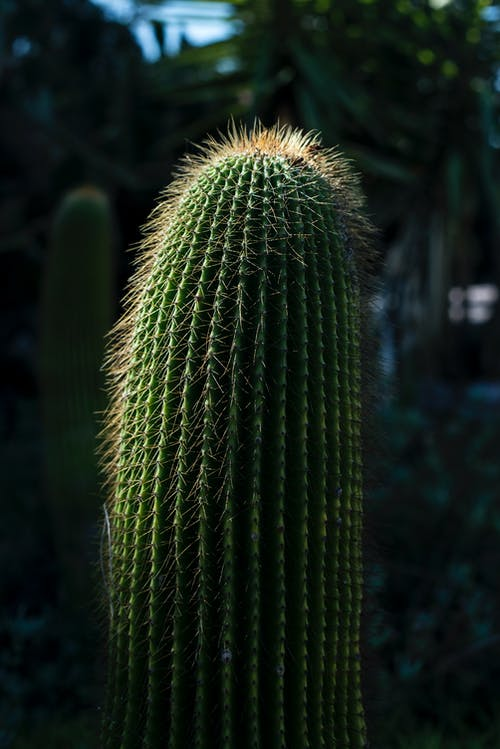 Free stock photo of backlight, cactus, daylight, green