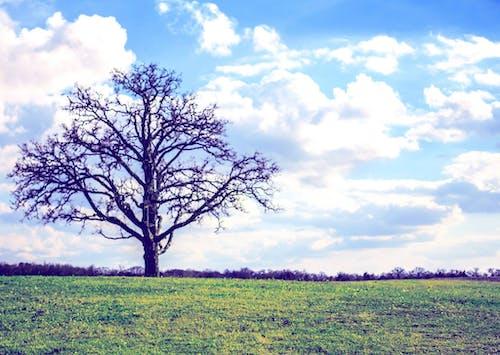 Imagine de stoc gratuită din arbore, câmp, copac mort, natură