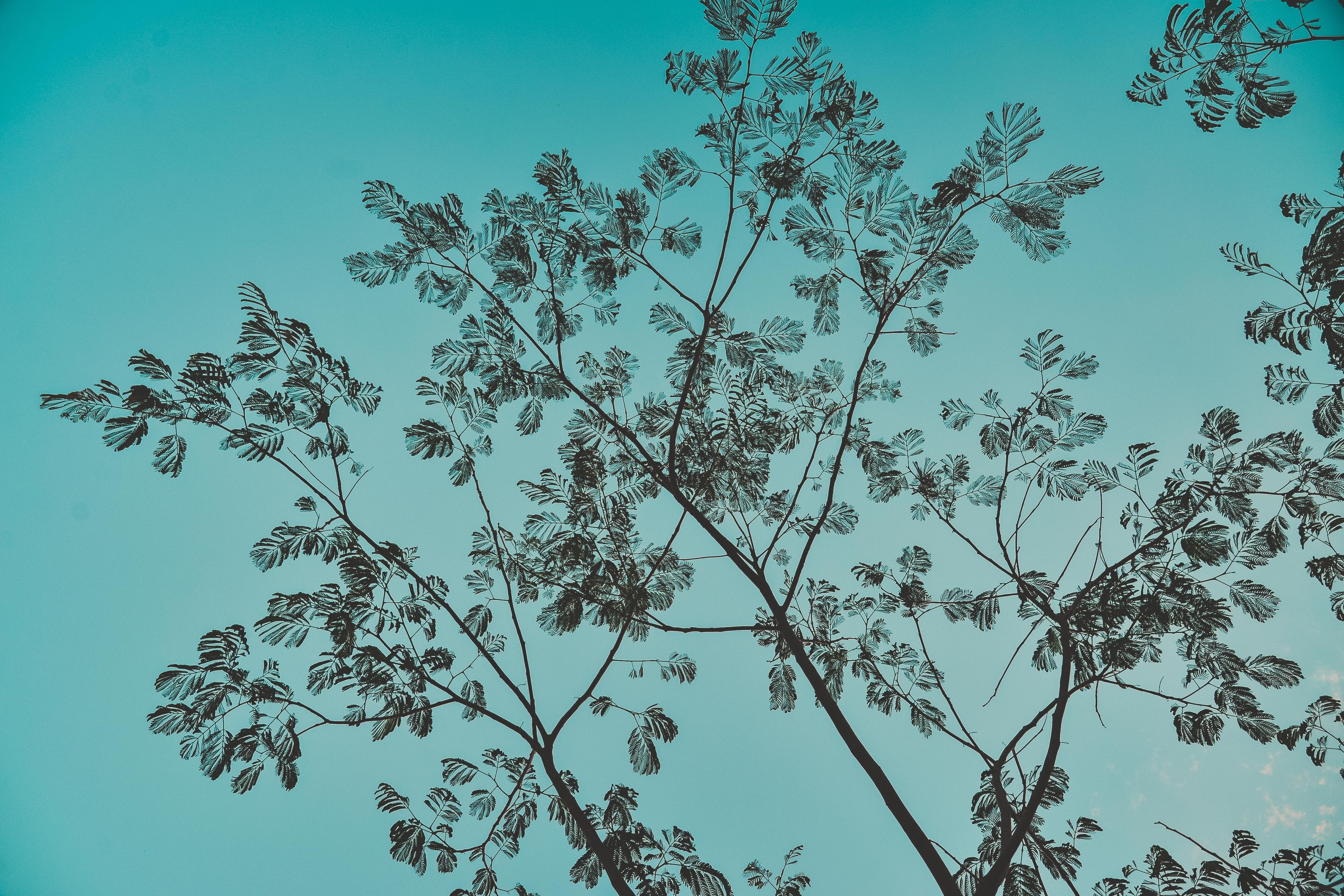 Black Leaf Trees Illustration