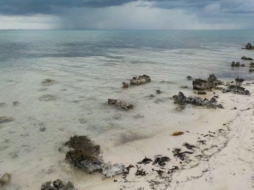 ケイマン諸島, ビーチ, ラム酒, 嵐の無料の写真素材