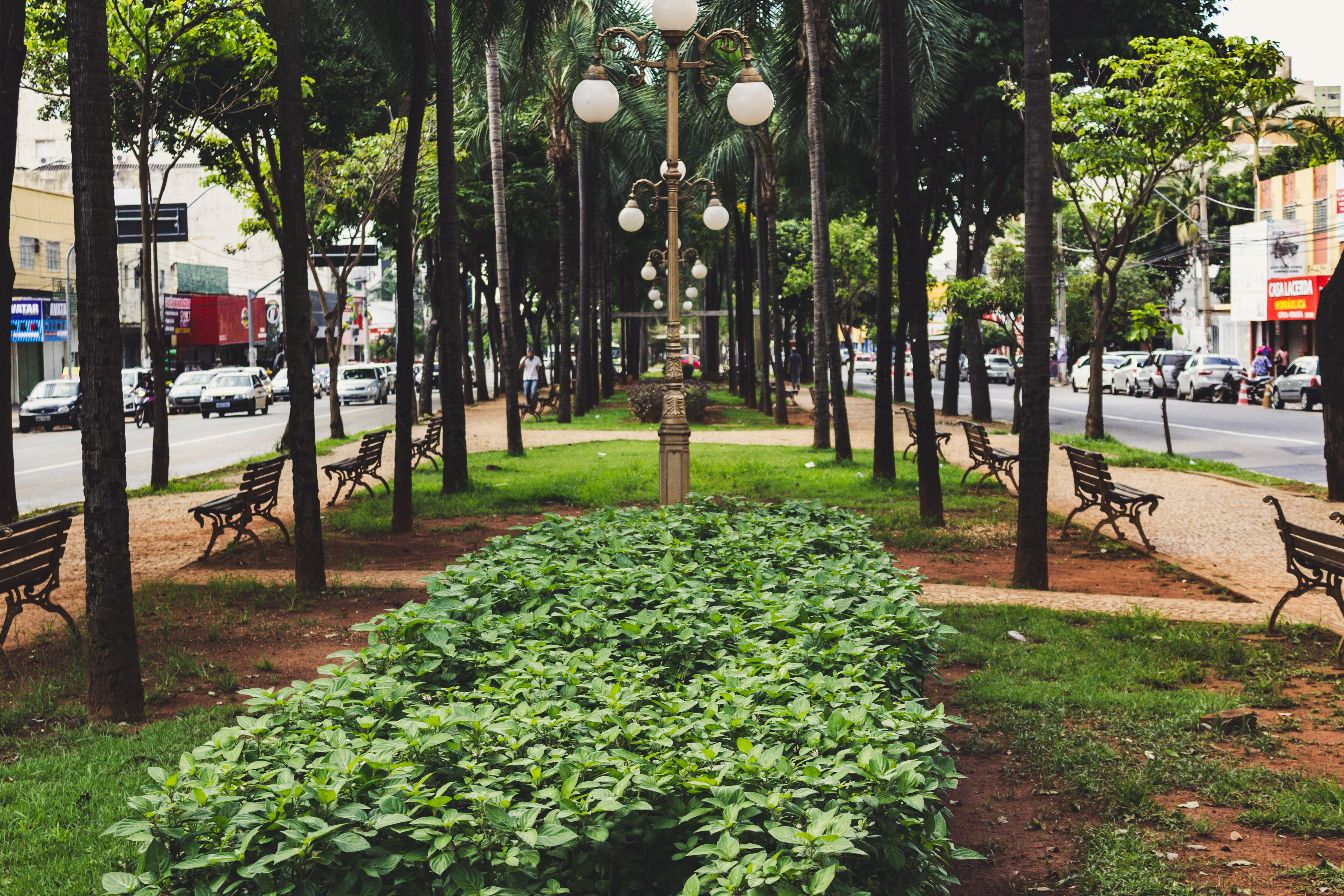Darmowe zdjęcie z galerii z avenida goiás, dzień, goiânia, miasto