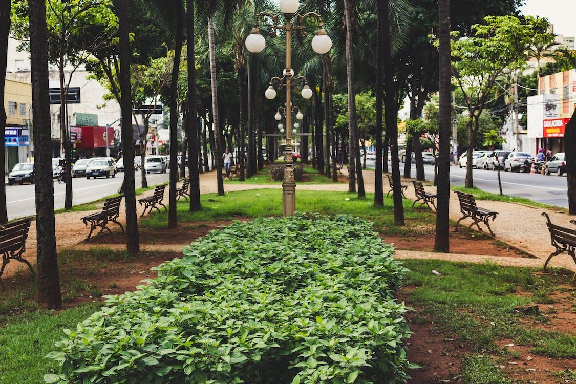 avenida goiás, brasilia, goiânia