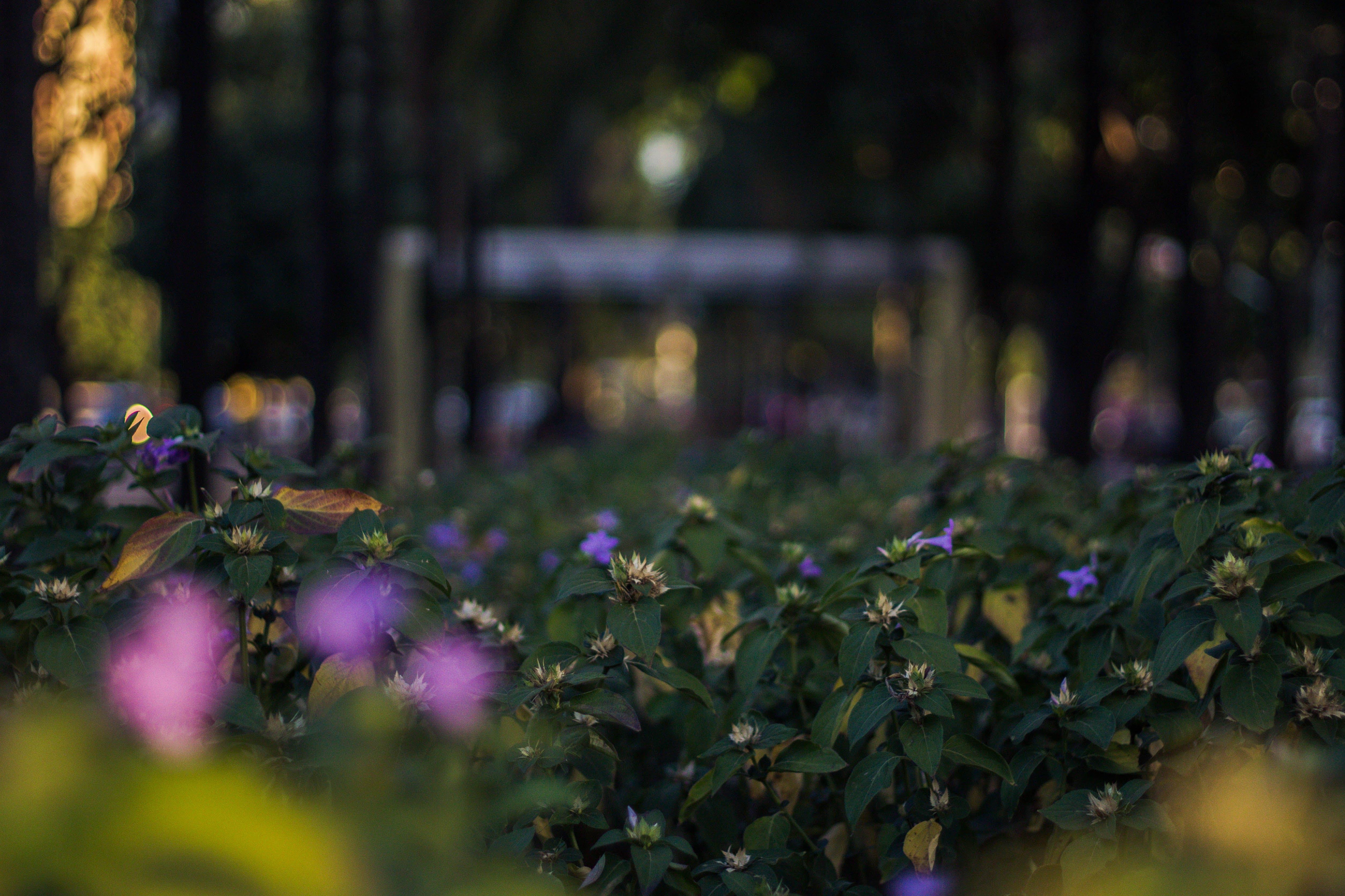Ảnh lưu trữ miễn phí về áo lót, goiânia, hệ thực vật, hoa