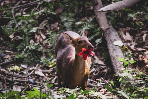 Fotos de stock gratuitas de animal, animales salvajes, bosque nacional, ciervo