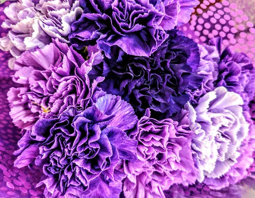 Ingyenes stockfotó közelről virágok, lila csokor, lila virág, lila virágok témában