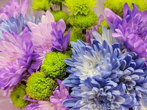 Ingyenes stockfotó levendula virág, lila és zöld, lila virágok, virágcsokor témában