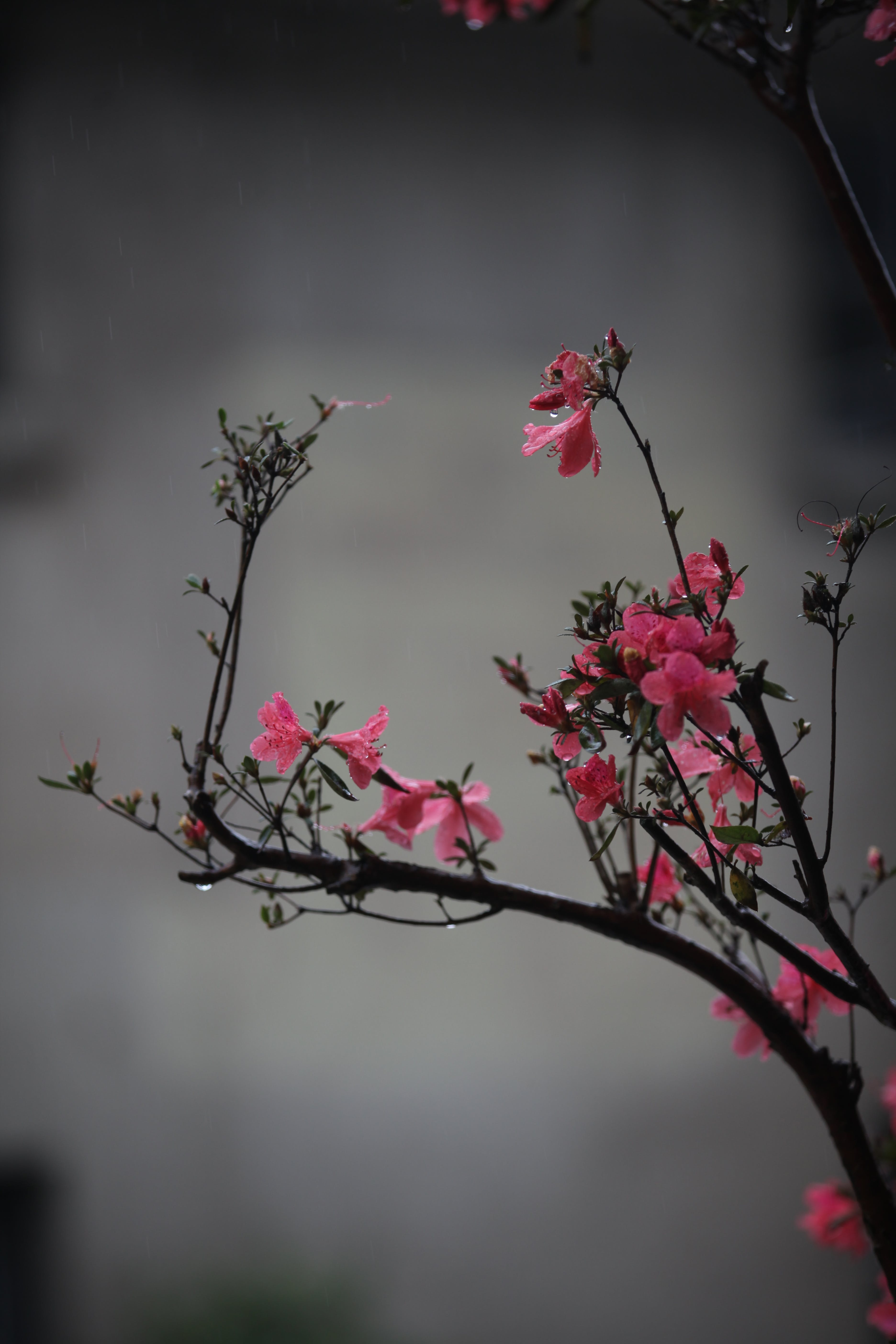 Selective Focus Photography Pf Pink Petaled Flower