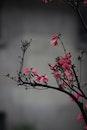 flowers, tree, macro