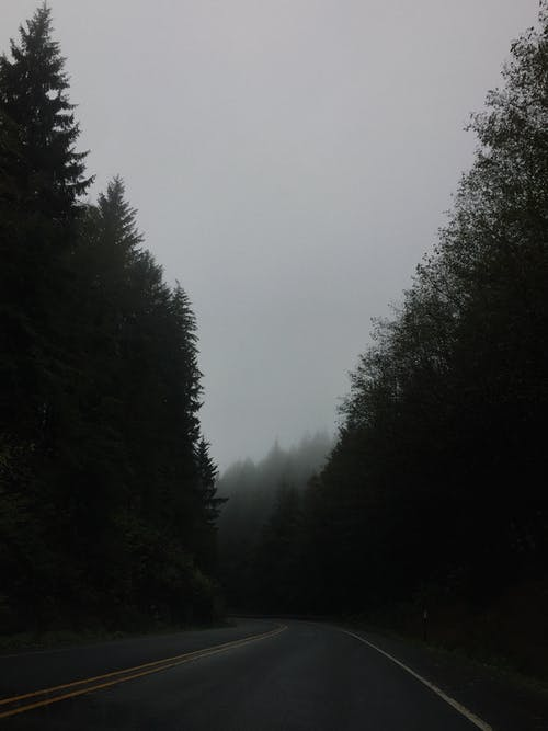 Photo of Highway Near Trees