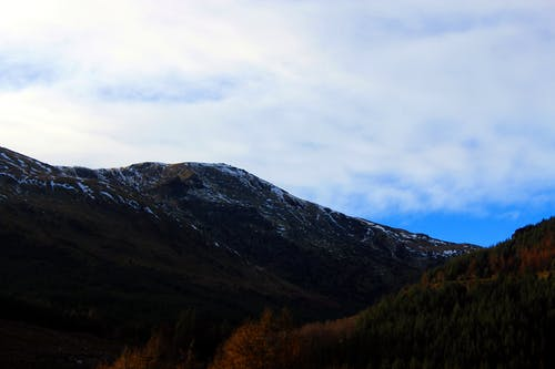 Foto d'estoc gratuïta de blanc, blau, bosc, cel