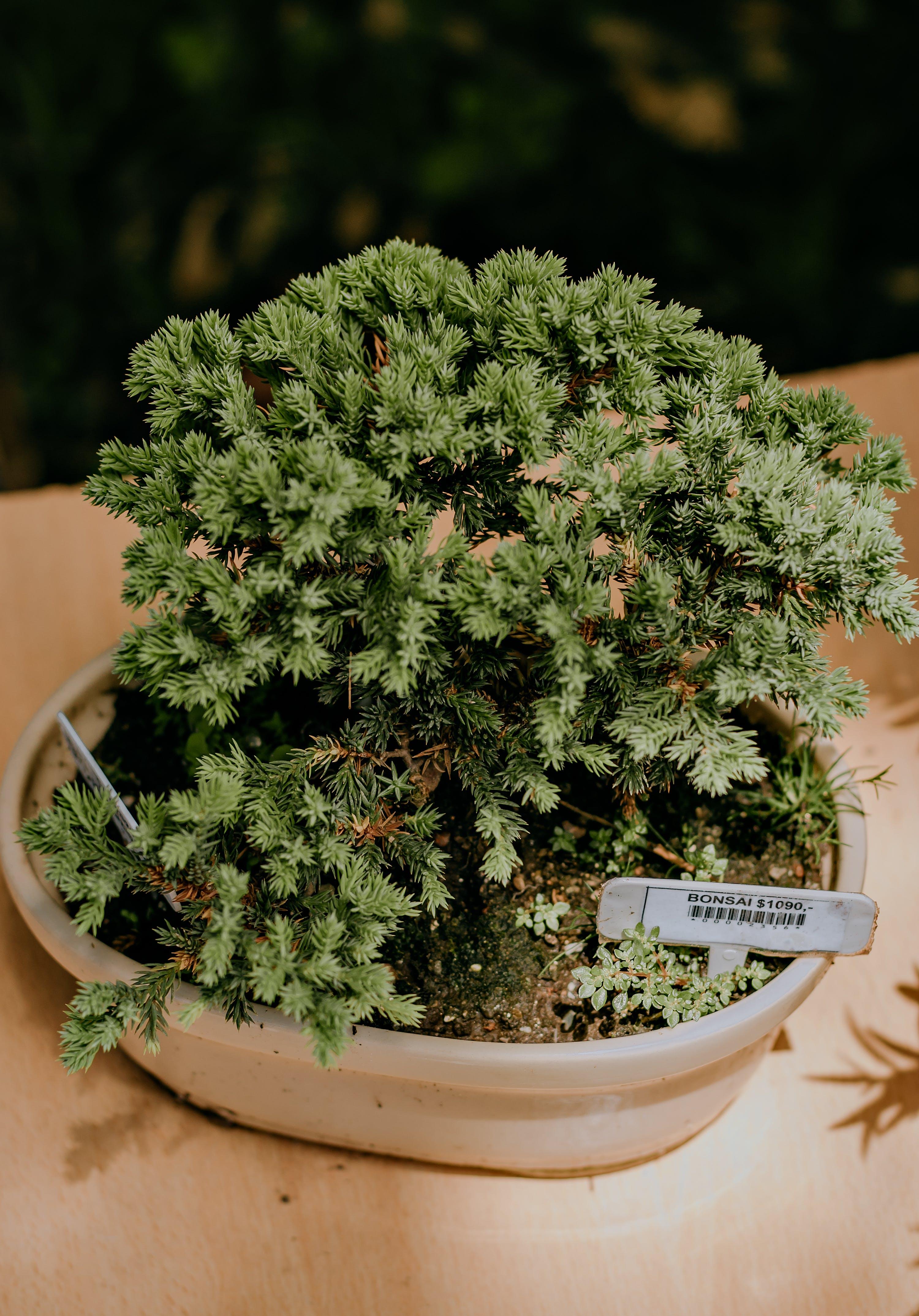 Kostenloses Stock Foto zu botanisch, farben, fokus, frisch