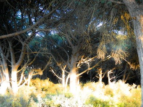 天性, 性質, 森林 的 免費圖庫相片