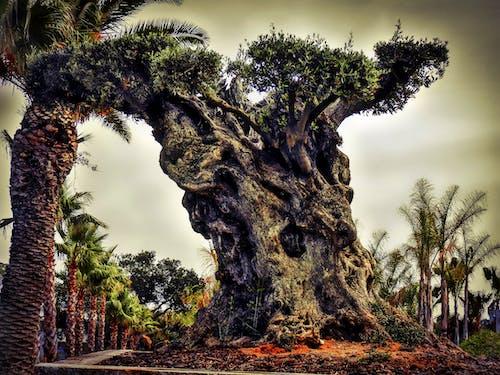 天性, 性質, 樹 的 免費圖庫相片